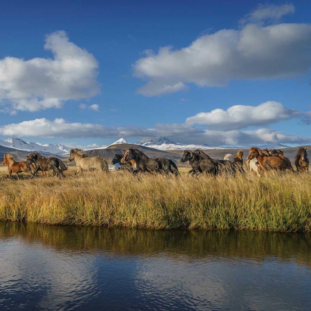 Sodulsholt Horse Farm & Cottages