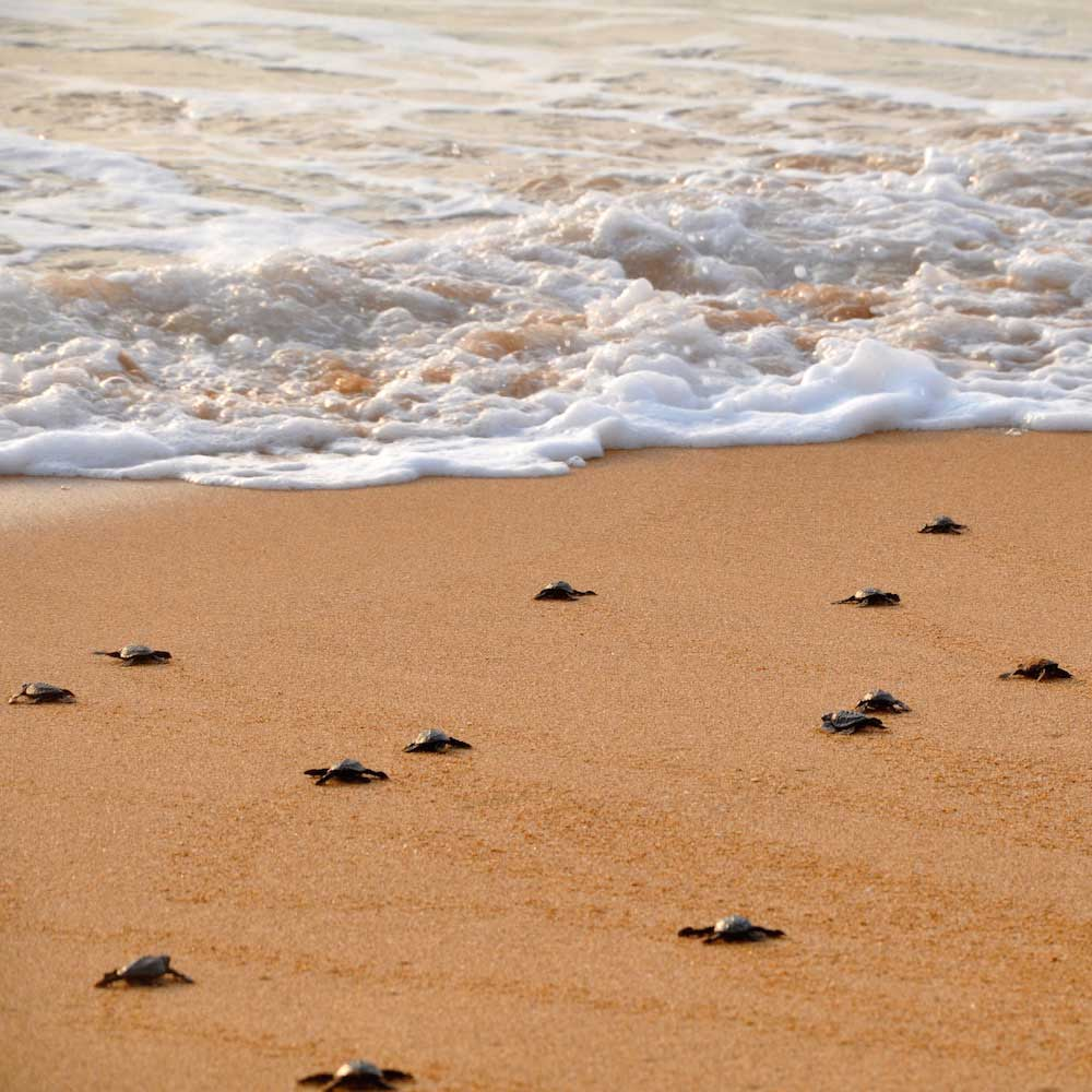 Induruwa Sea Turtle Conservation Center