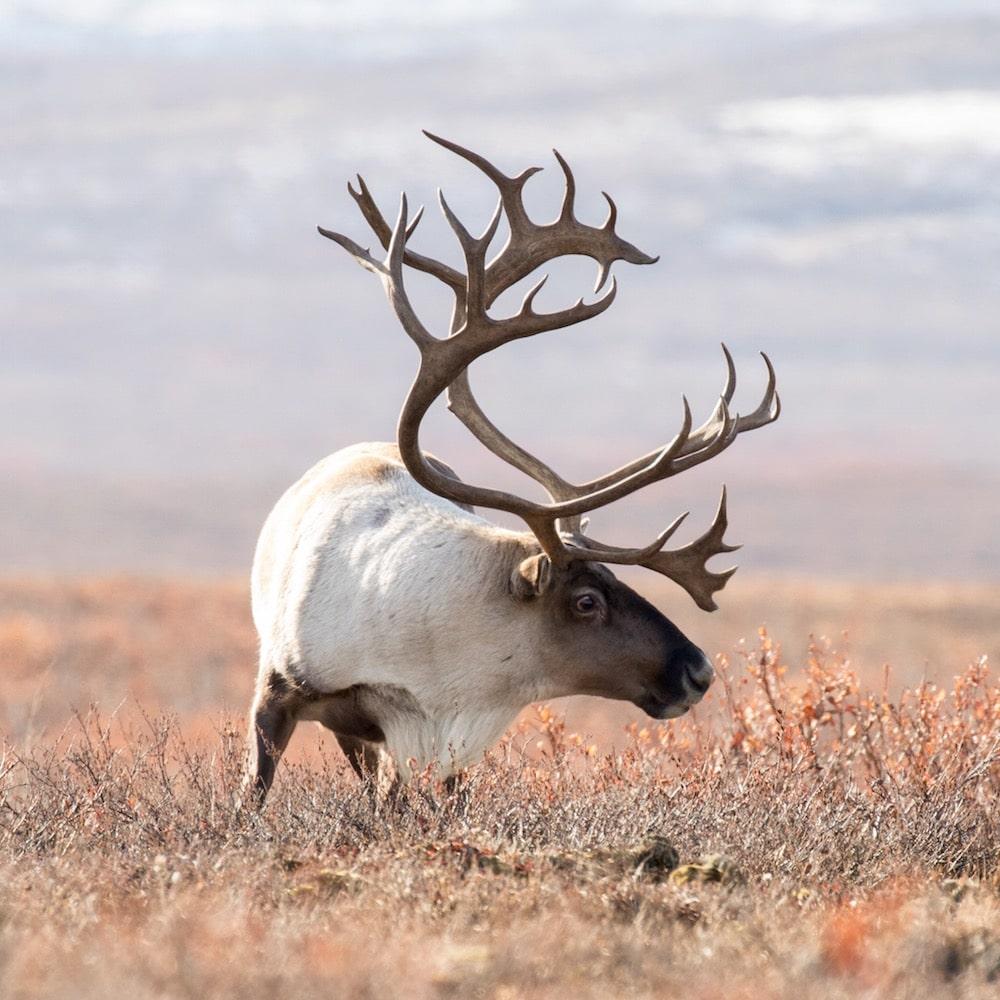 Selawik National Wildlife Refuge, Alaska