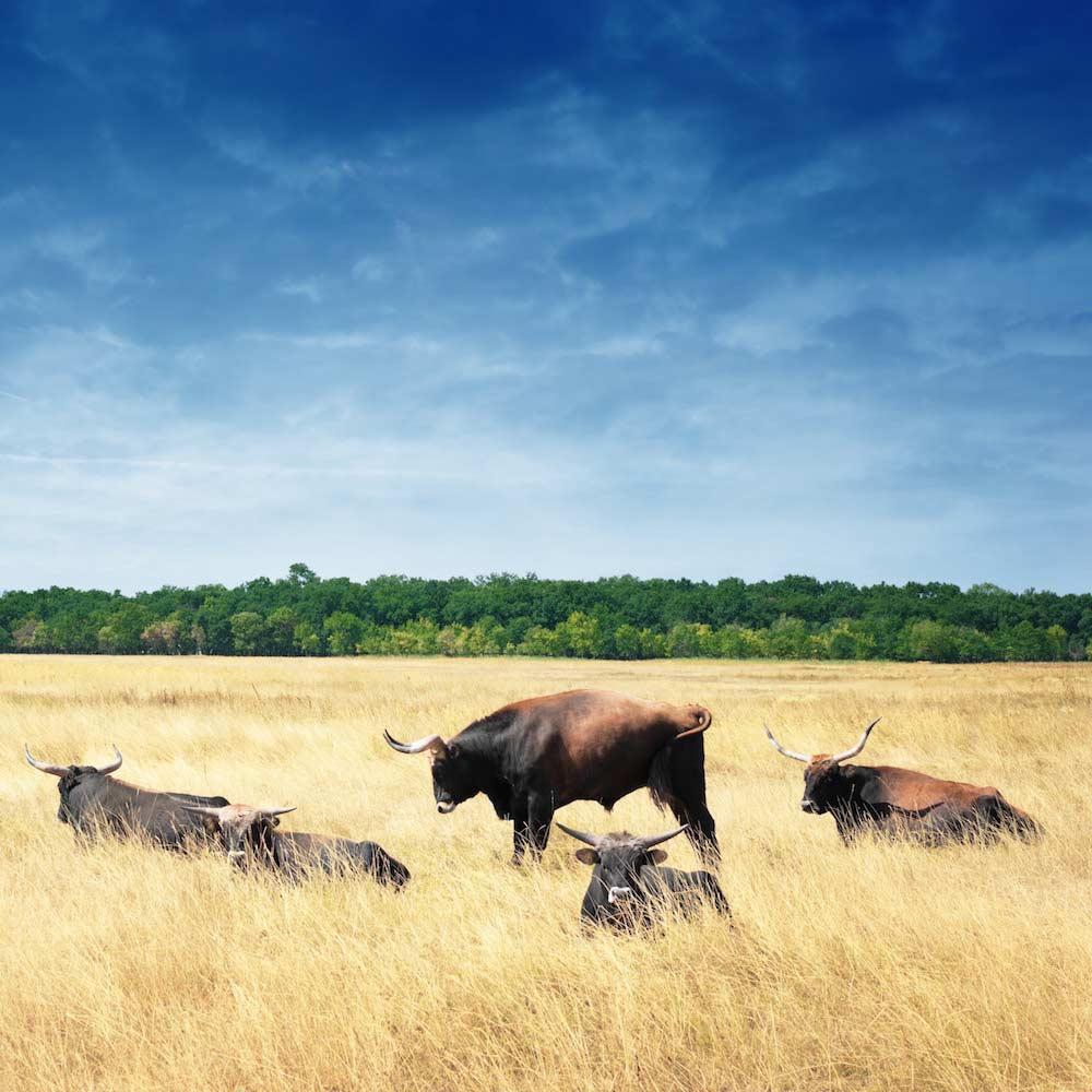 Hortobágy National Park