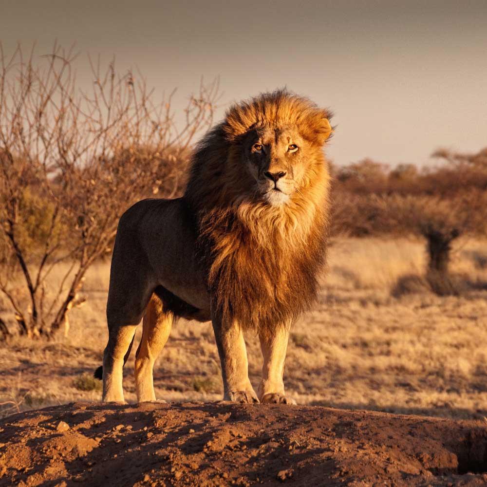 Wildlife & Safari